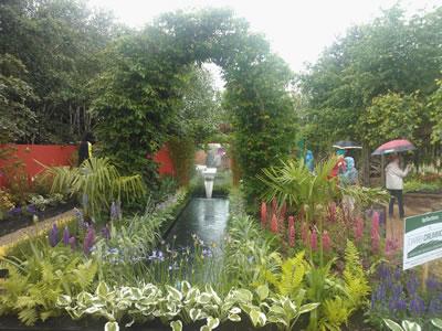 mallow garden